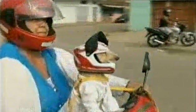 Cadelinha usa capacete e óculos para andar de moto com sua dona, pelas ruas de Governador Valadares